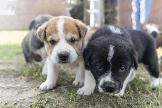 3匹の純血種のアラバイの子犬子犬は子犬の小さな犬と一緒に別の1つの面白い写真に座っていました