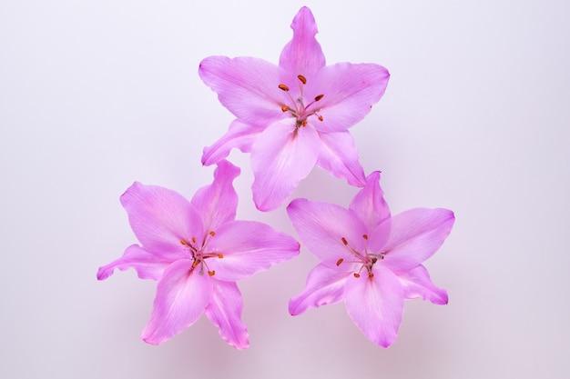 Три фиолетовые лилии на белом виде сверху.