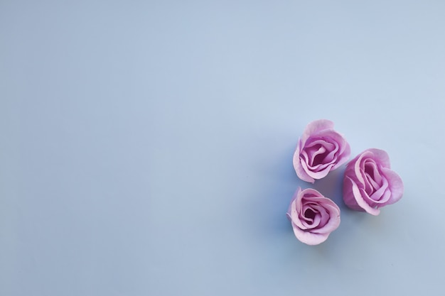 Three purple roses on light blue background with copy space