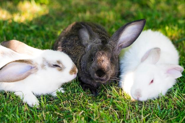 Три кролика в зеленой траве на ферме