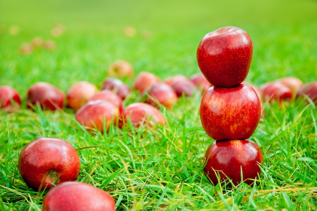 Three red apples stacked in grass field