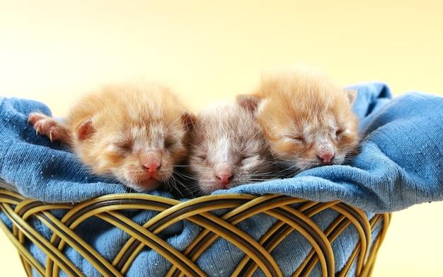 세 마리의 빨간 머리 새끼 고양이는 파란색 부드러운 천에 고리버들 바구니에서 잠을 잔다