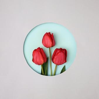 둥근 종이에 3 개의 빨간 튤립 회색 배경에 잘라. 봄, 휴일 축하 및 축제 행사 초대의 개념.