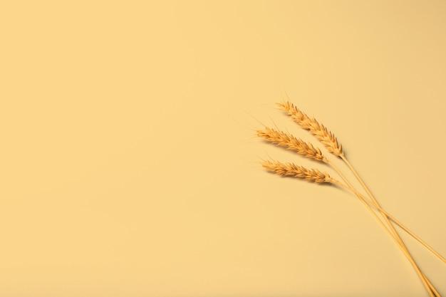 농업 테마 디자인을 위한 짙은 노란색 배경에 잘 익은 호밀 이삭 세 개. 복사 공간