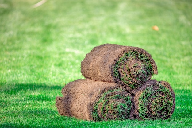 Three rolls of lawn grass on the lawn. ready grass for use in landscaping.