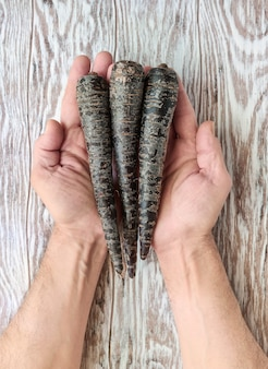 Three roots of black carrots on men palms on wooden table