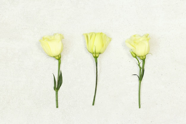 Three roses on grey background