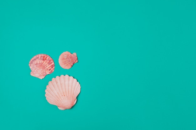 Three scallops seashell on turquoise background