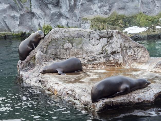 ゾーム・エルレブニスウェルトの水の近くの大きな石の上に横たわる3つのアザラシ