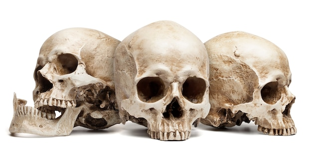 Three skull isolated, with shadow