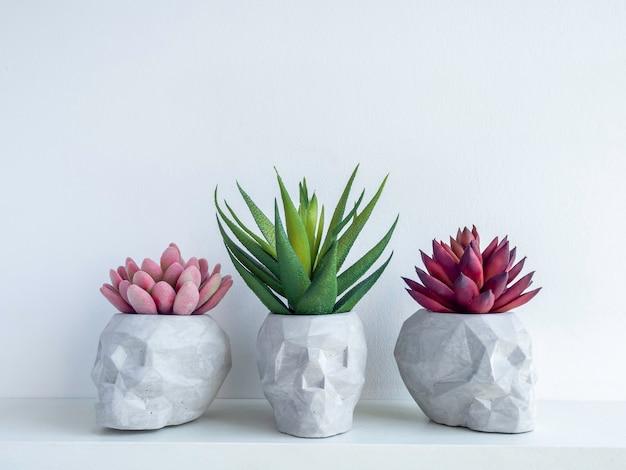 복사 공간 흰색 표면에 고립 된 흰색 나무 선반에 빨강, 분홍색 및 녹색 즙이 많은 식물을 가진 3 개의 두개골 모양 콘크리트 식물 냄비. 작은 현대 diy 시멘트 화분 유행 장식.