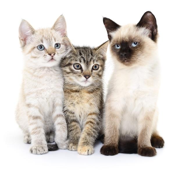 Три маленьких котенка на белом фоне.