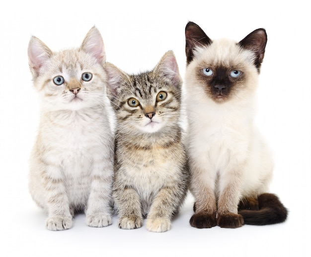 Three small kittens