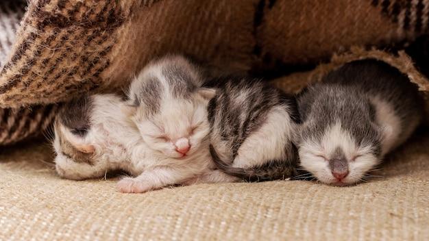 毛布の下で眠っている3匹の小さな新生子猫