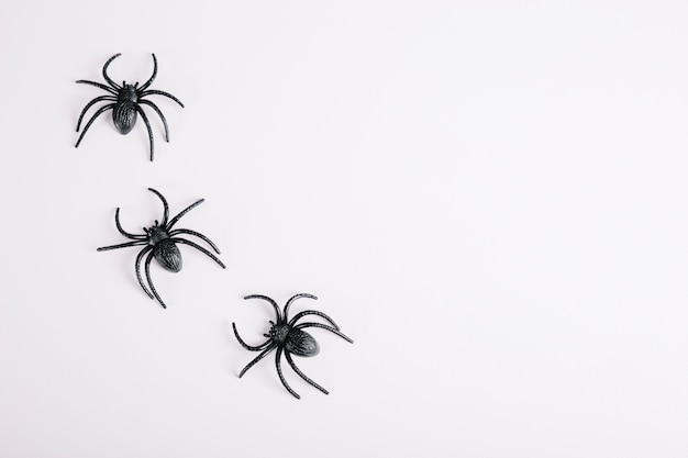 Three spiders lying on white background