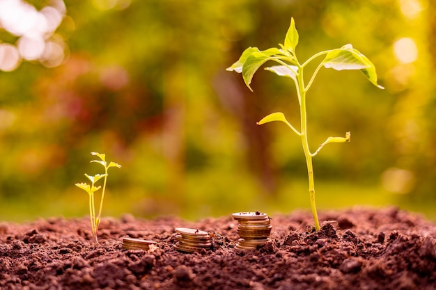 Three stacks of coins in the soil near the small plant sprouts, economy and money concept