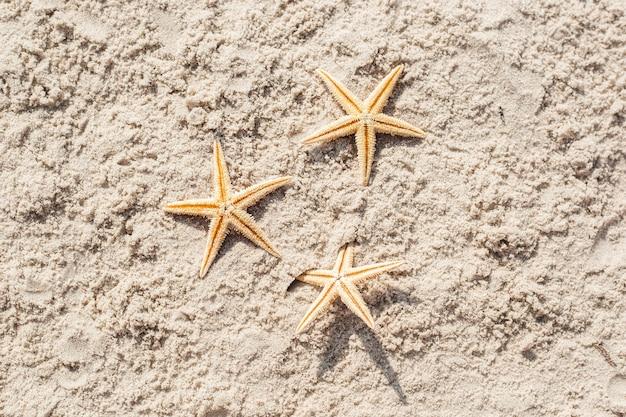 Три морские звезды на песке. вид сверху, плоская планировка.