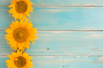 Three sunflowers on blue wooden background