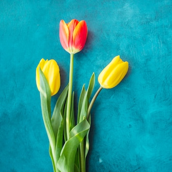 Three tulip flowers on blue table