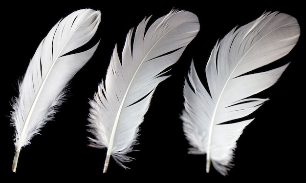 Three white feather isolated on black background.