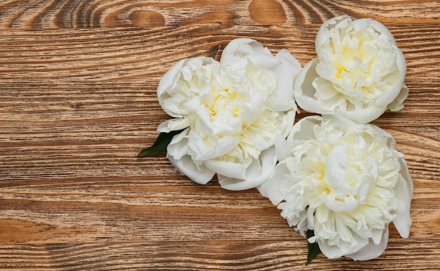 Three white peonies on a wooden background top view