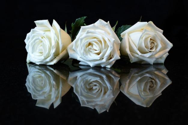 검은 반사 표면에 세 개의 흰색 장미