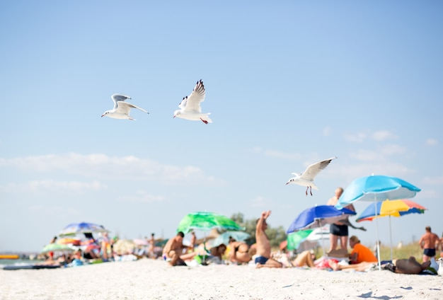 Three white sea gulls fly against the background of a wild sandy beach with people and colorful umbrellas