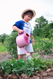 Three years old asian preschool girl watering plants in home vegetable garden using pink small watering can, plant care and sustainability concepts.
