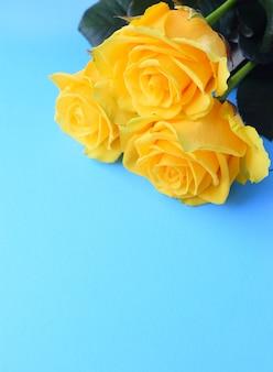Три желтых красивых розы на ярко-синей стене. вертикальный.