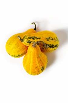Three yellow pumpkins isolated on white background. autumn vegetable harvest.