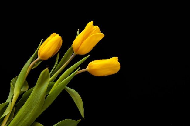 Три желтых тюльпана, изолированные на черном фоне
