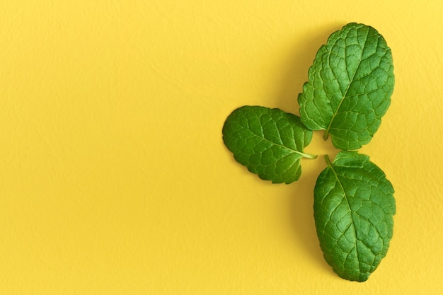 Three young fresh mint leaves isolated on a yellow background