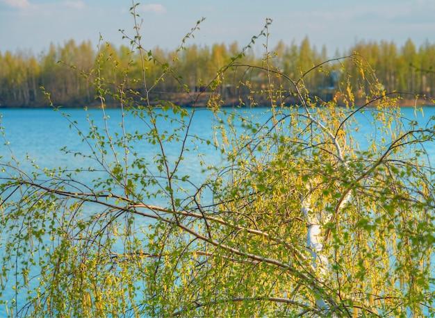 Сквозь березу на берегу реки фон hd
