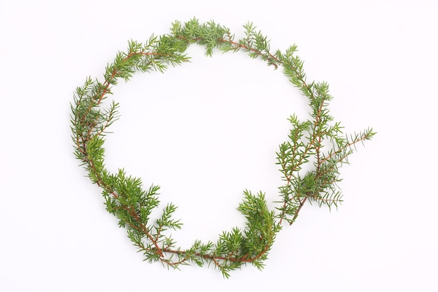 Ветви туи, изолированные на белом фоне