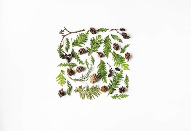 フラットは、白い背景の植物部分の創造的な自然なレイアウト広場を置きます。 thuja、植物のコーン植物コンセプトセット。コピースペース、トップビュー