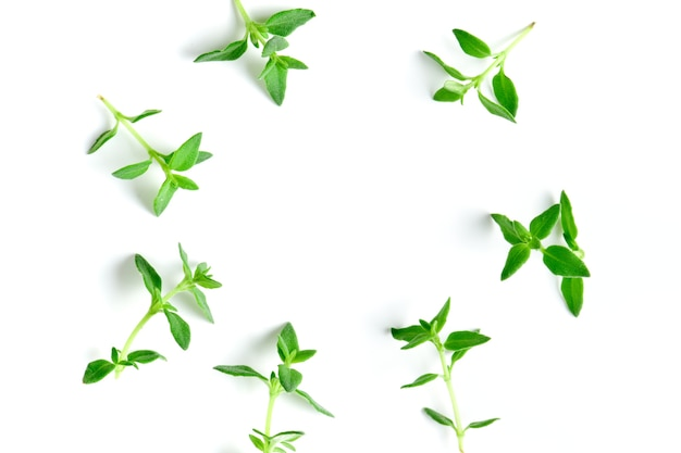 Thyme fresh herb background with copy space.