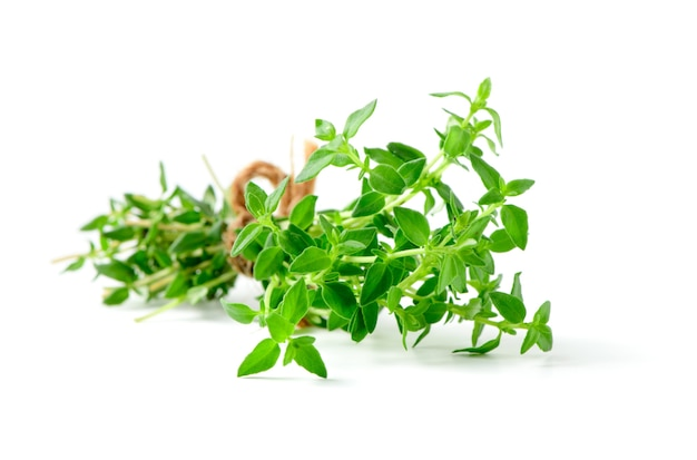 Thyme fresh herb closeup isolated
