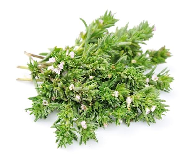 Свежие травы тимьяна, изолированные на белом фоне