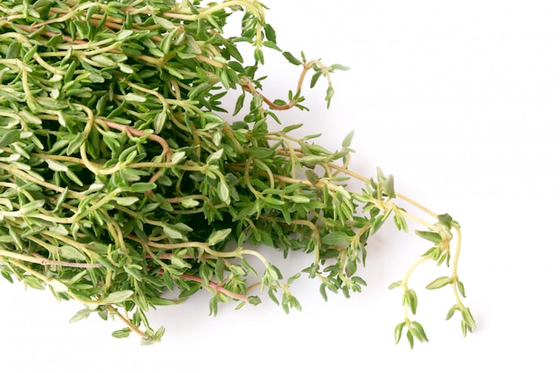 Thyme isolated  chabrets