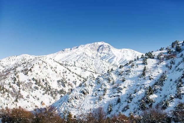 Горная система тянь-шаня в узбекистане. зимний пейзаж на горнолыжном курорте бельдерсай