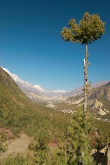 チベットの緑の谷、アンナプルナトレッキングからの眺め