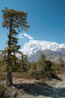 히말라야 산과 푸른 하늘에 전나무와 티벳어도.