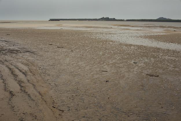 Tidal mudflat ecosystem , french guiana