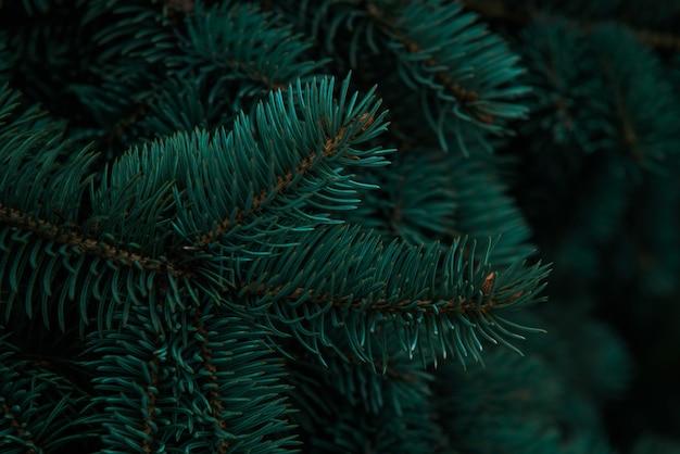 2021年の潮水緑色。クリスマスツリーの枝の背景