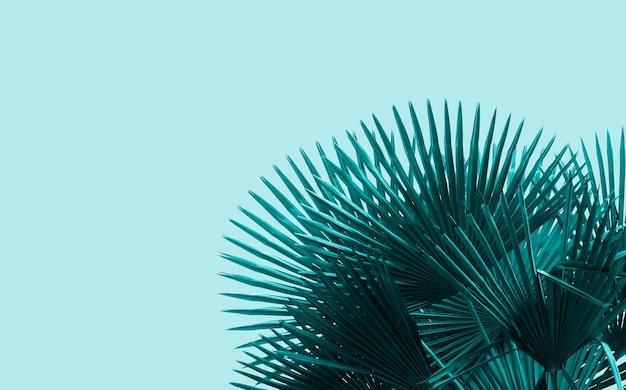 タイドウォーターグリーン色のヤシの木の葉の背景