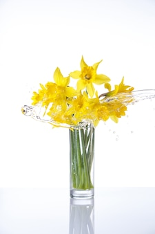 Tied narcissus isolated on white surface, summer flowers in glass with splashes of water, with reflection