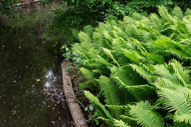 The tiergarten, walk through the green beautiful park in central berlin, plants near the water