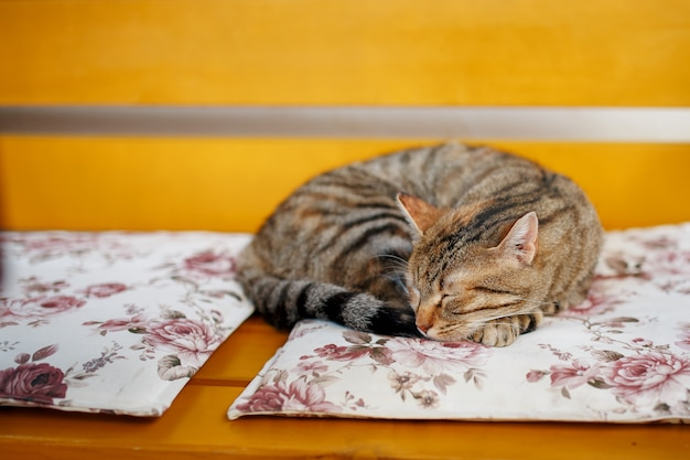 A tiger cat sleeps sweetly on an orange bench, curled up in a ball.