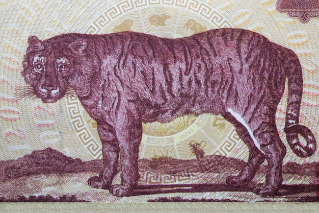 Tiger from chinese money