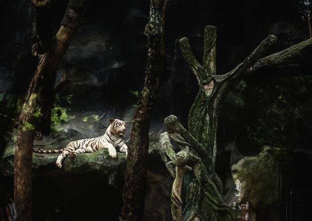 Тигр лежит в зоопарке
